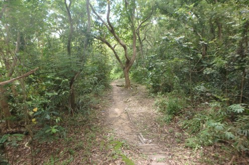 läbi metsa kesklinna