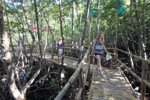 jalutus mangroovimetsas
