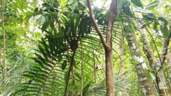 nunnumeeter lõhku. tarsierid ehk kandlased. vist kõige pisemad primaadid.