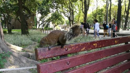 oravad olid suht matsakad ja julged