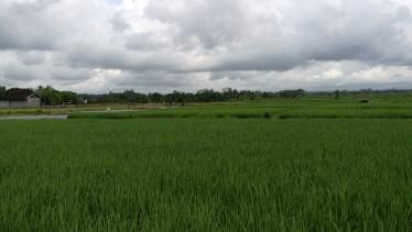 riisipõllud on ilusad