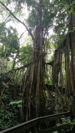 puud peaaegu ei olegi, ainult juured