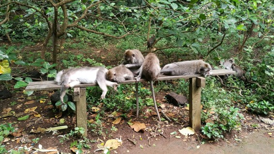 veel üks ahvipere