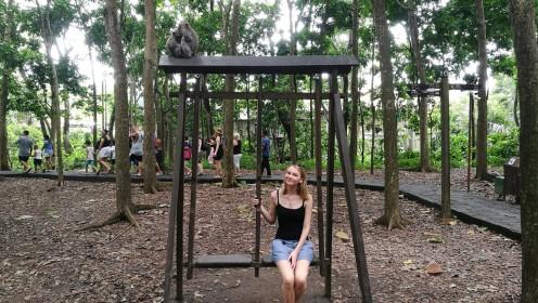 mitu ahvikest on pildil?
