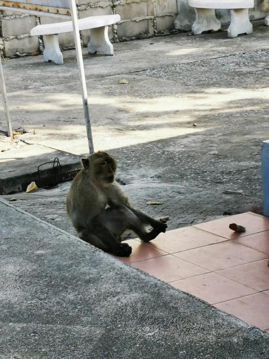lisaks Buddhale olid ka ahvid