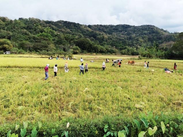 tagasiteel peatusime ka korra, et vaadata kuis riisikoristus käib